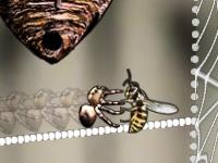 spiderhornetsmash.jpg